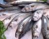 Jedz ryby, a będziesz żył dłużej!