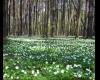 Jak poradzić sobie z wiosennym przesileniem ?