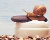 Pielęgnacja śluzem ślimaka. Czy warto zaufać ślimaczym kosmetykom?